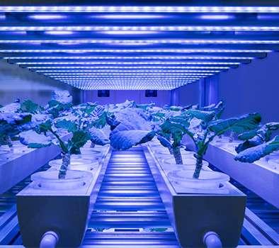 iluminacion led de plantas